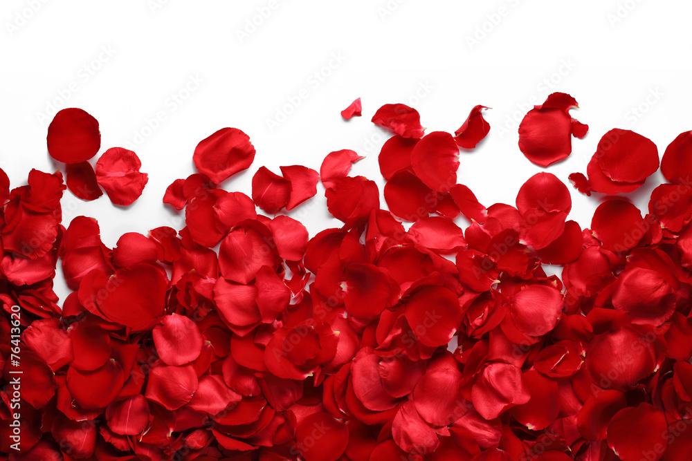 Fototapeta Rose petals