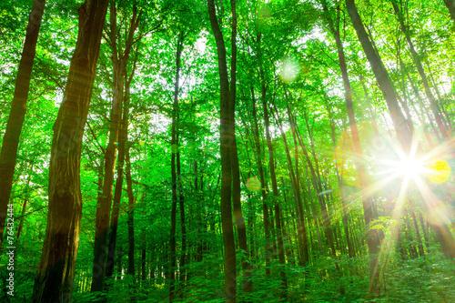 Papiers peints Forets forest trees.