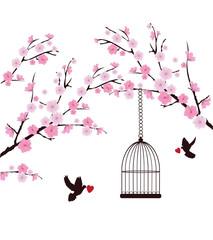 Fototapeta Drzewa Cherry Blossom