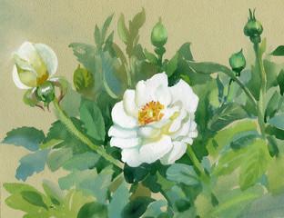 Panel Szklany Romantyczny White watercolor flowers bouquet on beige background