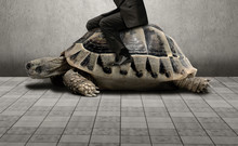 Businessman Sitting On Turtle