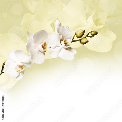 Obrazy wieloczęściowe piękne białe orchidee