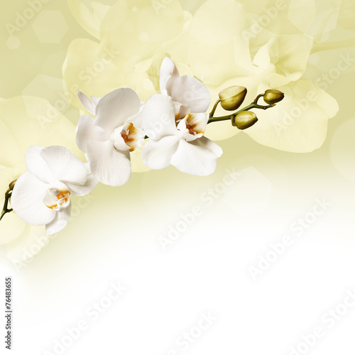 piekne-biale-orchidee