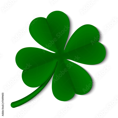 Fototapeta leaf clover isolated on white background