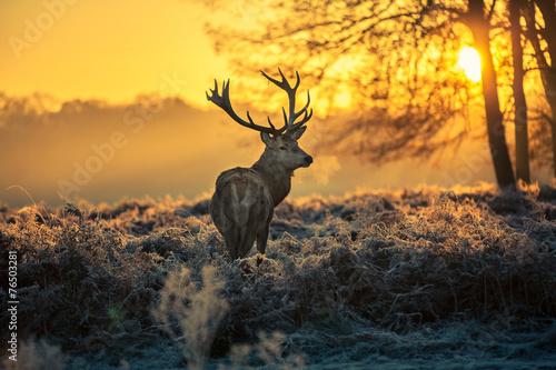 Spoed Foto op Canvas Hert Red deer