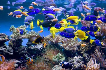 Obraz na Szkle Аквариум с рыбками