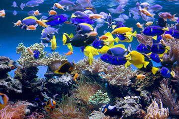 Fototapeta Rafa koralowa Аквариум с рыбками