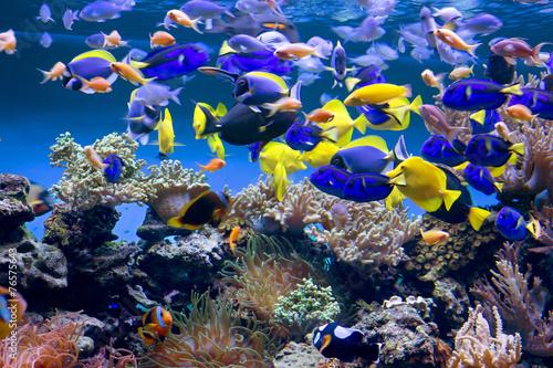 Fotografie, Obraz  Аквариум с рыбками