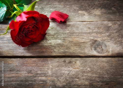 Foto-Tapete - Valentine's day background with red roses (von esdras700)