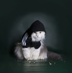 dangerous cat rough jacket with a hood on a dark background