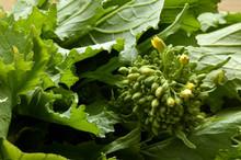 Brassica Rapa Sylvestris Cime Di Rapa Stängelkohl