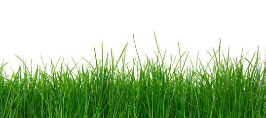 Fototapeta Green grass on white background