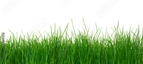 Foto op Plexiglas Gras Green grass on white background