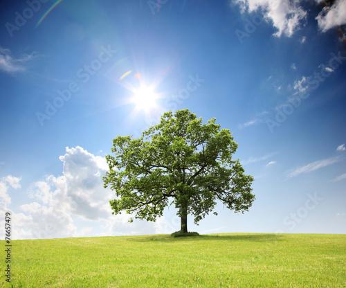 Foto op Aluminium Bomen Baum auf dem Land