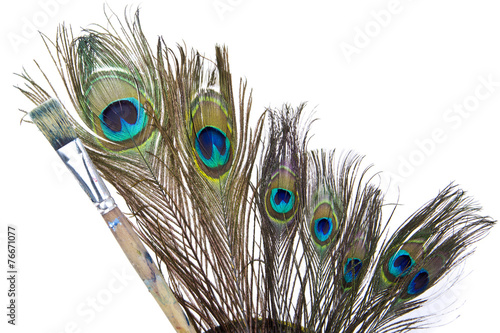 Foto op Aluminium Pauw peacock feathers isolated white background