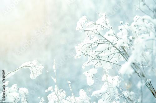 White winter background.