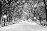 Fototapeta New York - Central Park, NY covered in snow at dawn