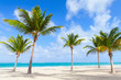 Palm trees grow on empty beach with white sand