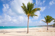 Palm trees on empty beach with white sand