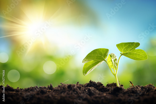 Foto op Canvas Planten Young sprout