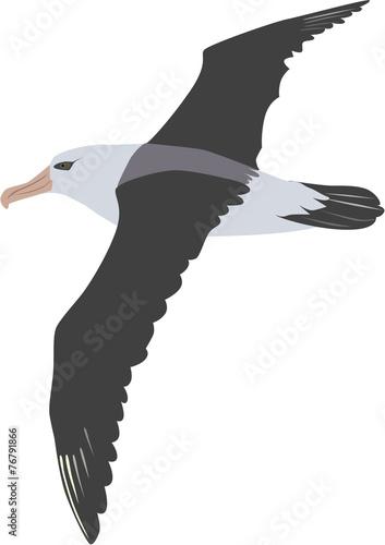 Fotografia, Obraz  giant flying albatross vector