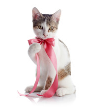 The Kitten With A Pink Tape
