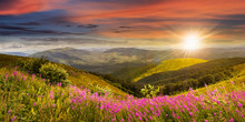 Wild Flowers On The Mountain T...