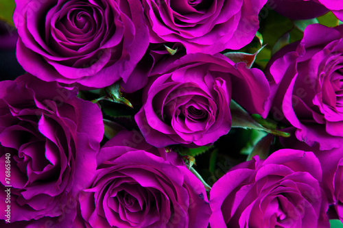 Purple natural roses background #76865840