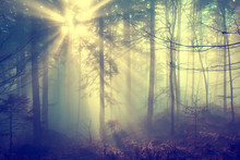 Magic Foggy Forest
