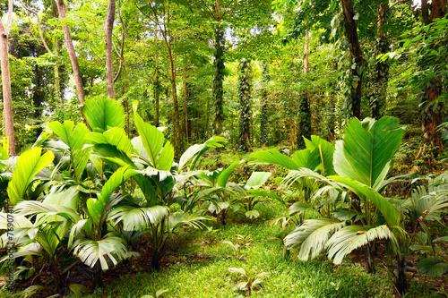 tropikalny-las-tropikalny-w-mahe-wyspie-seychelles