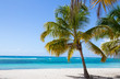 Palmen am Strand von Isla Saona.