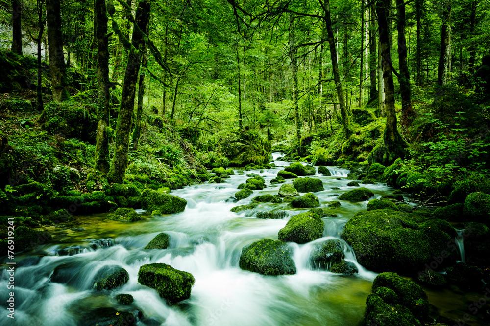 Fototapeta Bach im Wald