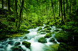 canvas print picture - Bach im Wald