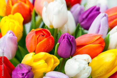 Obraz Kolorowe tulipany - fototapety do salonu