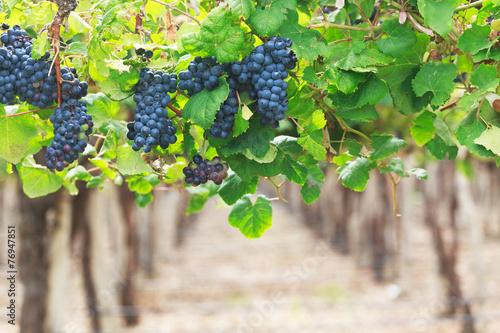 Tuinposter Wijngaard Vineyards, Argentina