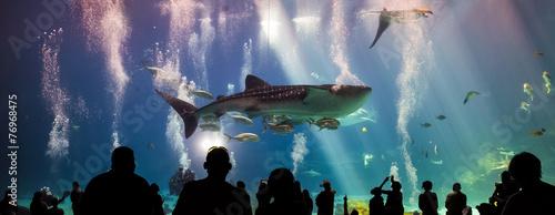Plakat Rekiny wielorybie i wiele gatunków ryb pływających w akwarium