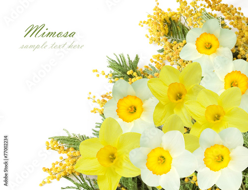 Mimosa and narcissus flowers Canvas Print