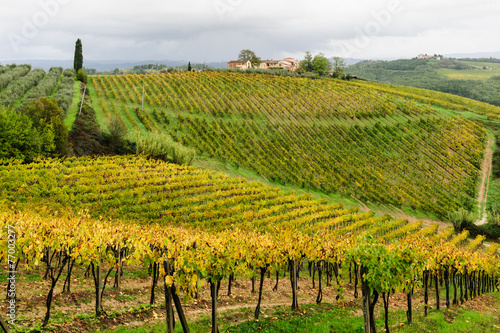 Wall Murals Vineyard Colline toscane 7