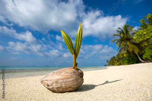 Deurstickers Tropical strand coconut palm on the sandy beach of tropical island