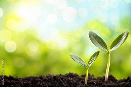 Fotobehang Planten Young sprout