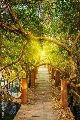 Foto op Canvas Weg in bos Wooden bridge in flooded rain forest jungle of mangrove trees