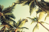 Fototapeta  - Coconut palm trees and shining sun over bright sky