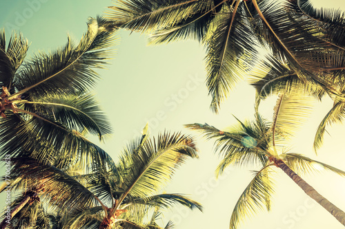 Coconut palm trees and shining sun over bright sky Poster