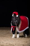 Pony Weihnachtsmann
