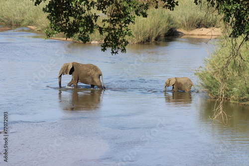 Foto op Plexiglas Zuid Afrika Elefantenfamilie durchquert Fluß Krüger Nationalpark Südafrika