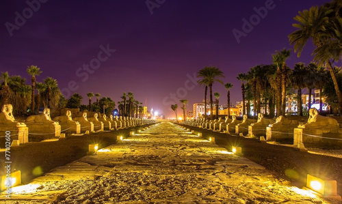 Tuinposter Egypte Alley of the Sphinxes in Luxor - Egypt