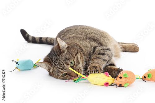 Keuken foto achterwand Kat chat jouant avec souris