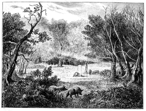 Fotografie, Obraz  19th century engraving of the New Forest, UK