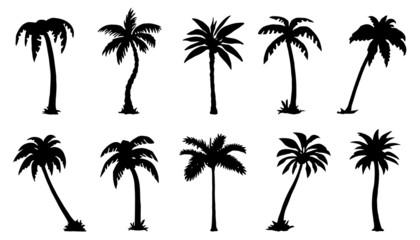 silhute od palmi