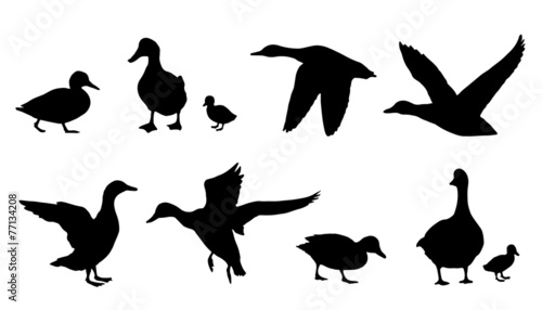 Canvas-taulu duck silhouettes